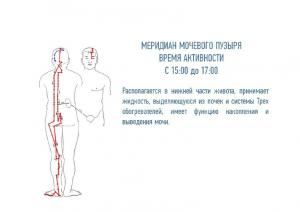 Презентация почки 2 курс 28 (2).10.2014_cr (1_23
