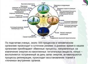 суточные биоритмы