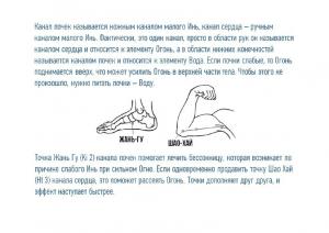 Презентация почки 2 курс 28 (2).10.2014_cr (1_32