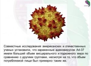 аденовирус ad-37 -одна из причин ожирения