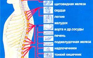 роль позвоночника при развитии болезней